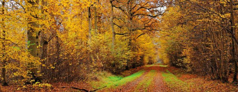 normal_Une-allee-en-automne-dans-la-foret-de-Ferrieres