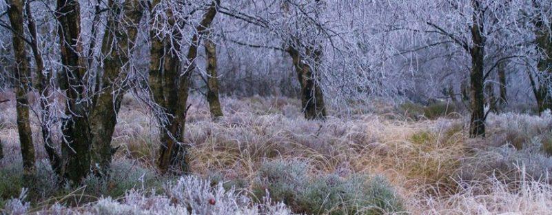 xcrie-reconnaitre-les-arbres-en-hiver-2-850x340